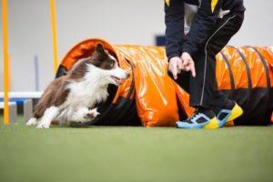Doggo Parcours Agility-Schuh