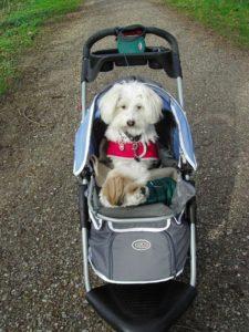 Innopet First Class Hundebuggys
