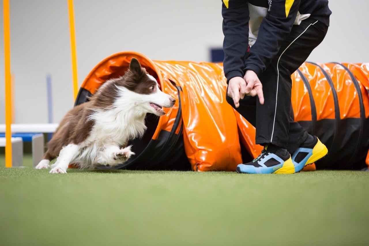 Doggo Agility-Schuhe für Hundehalter