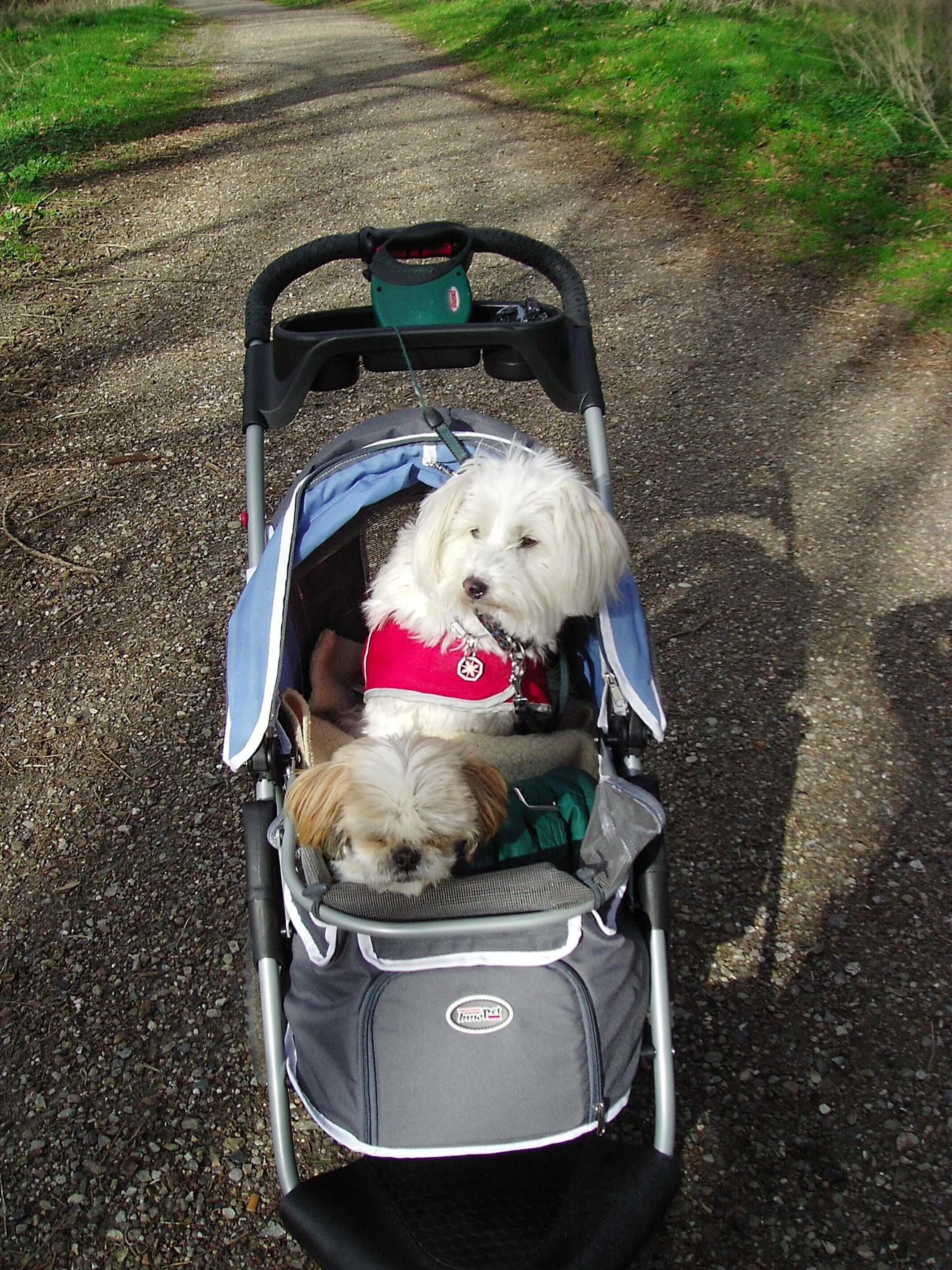 Hundebuggy bei Mobilitätsproblemen