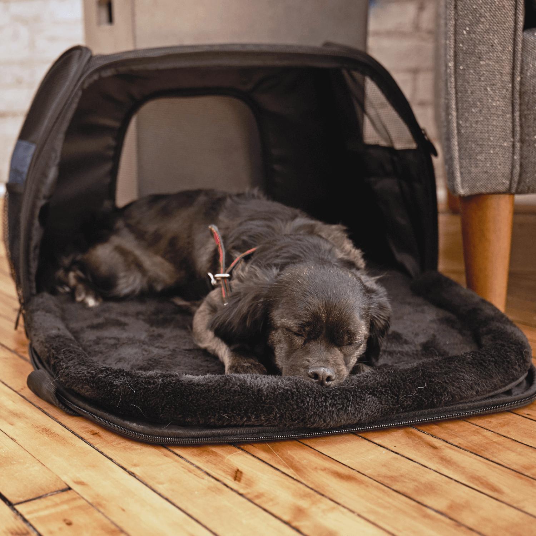 InnoPet 2 in 1 Hundetasche für kleine Hunde mit Mehrwertsteuersenkung