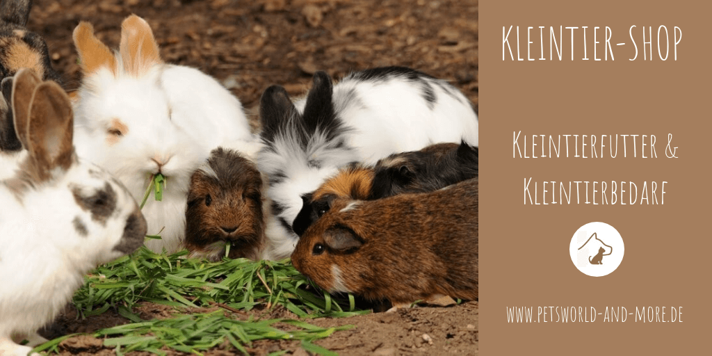 Kleintier-Shop Petsworld and more